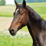 horse-1617859_1280